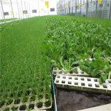 El bastidor de acero galvanizado agrícola de la película de plástico de invernadero gases de efecto túnel