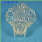Dents de enseignement vétérinaires de chat de vente de chat de dents de modèle chaud de maxillaire modèle professionnel transparent