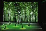Comitato di pubblicità dell'interno di alta qualità P6mm LED per installazione fissa