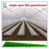 زراعة حديقة تجاريّة [غرين هووس] بلاستيكيّة مع [كول سستم]