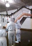 De Kip die van het Gevogelte van de Lopende band de Apparatuur van het Slachthuis van de Kip van /Auto van de Apparatuur slachten