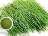 Het Poeder van het Gras van de Tarwe van de hoogste Kwaliteit, Wheatgrass Poeder, het Poeder van het Sap van het Gras van de Tarwe