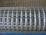 Il fornitore cinese della fabbrica ha galvanizzato la rete metallica saldata del ferro