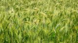 Fertilizante composto de NPK com % da água de /100 do fertilizante de Fe&Mn - Te solúvel (elemento de traço)