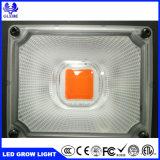 卸し売り完全なスペクトル50Wの強力なHydroponic穂軸LEDは温室植物のために軽く育つ