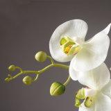 나비 난초 인공 꽃, 인공 꽃, 가정 훈장, 실제적인 접촉 8 헤드 나비 난초를 위한 백색 나비 Fower