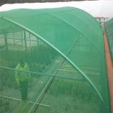 90% Landwirtschafts-niedriger Preis HDPE Grünsun-Farbton-Filetarbeit
