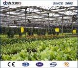 고품질 다중 경간 판매를 위한 농업 필름 온실