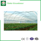 농업 설치를 위한 다중 경간 플라스틱 또는 필름 온실