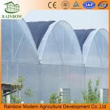 Serra industriale della multi portata con il sistema idroponico
