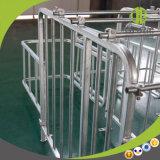 Stalle en acier de gestation de porc d'acier en forme de tuyau de qualité professionnelle de fabrication