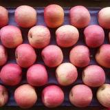 Золотой поставщиком на свежие фрукты свежие Apple