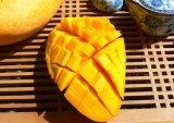 La perte de poids Irvingia gabonensis ingrédient Extrait Extrait de graines de mangue africaine