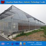 Serra idroponica Invernadero della tettoia del film di materia plastica del sistema di basso costo