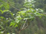 La meilleure qualité de catéchines promotionnel extrait de plante avec un grand prix