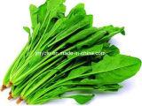 Polvere naturale dell'estratto degli spinaci con la vitamina K, 4:1 ~20: 1
