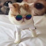 Niedriger Preis-kleidet kundenspezifische Haustier-Kleidungs-Haustier-Katze Haustier-Zusatzgerät