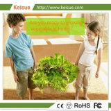 Растения гидропоники Keisue все машины с индикатором