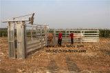 販売のための電流を通された鋼鉄牛クラッシュHeadbails