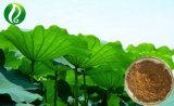 La perte de poids du produit extrait de feuille de lotus Nuciferine