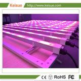 성장하고 있는 정착물을%s 가진 Keisue LED 성장하고 있는 빛