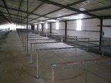 Prefabricated 가벼운 강철 구조물 가금은 유숙한다