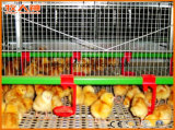 Máquinas personalizadas da casa de galinha com construção de aço na venda quente