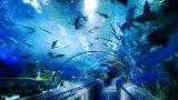 [100غ] أوزون مولّد لأنّ حوض مائيّ [وتر ترتمنت] /Aquaria [أزونتور]
