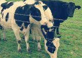 Rete fissa ad alta resistenza ed Endurable azienda agricola/di Galssland
