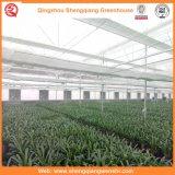 Сад / Сельское Хозяйство Туннель Поликарбонатный Лист Зеленые Дома для Выращивания Овощей и Растений
