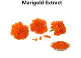 Les pigments d'aliments naturels de la lutéine Marigold extraire en poudre