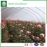 Agriculture de la serre chaude de film pour des légumes/fleurs