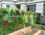 Parete della pianta sempreverde