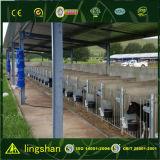 Costruzione d'acciaio chiara della costruzione dell'azienda agricola della mucca di basso costo