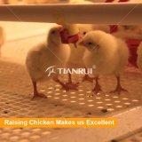Taux automatique de poussins de grilleur d'aviculture de modèle direct d'usine