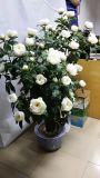 Fleurs artificielles de 5 chefs Rose Gu-Jy915221446