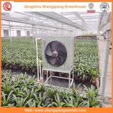 Chambres vertes de film de tunnel de Simple-Envergure pour le légume/fleur