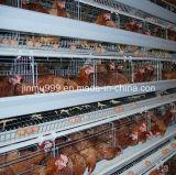 طبقة دجاجة دواجن تجهيز قفص من الصين