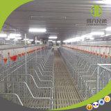 Fournisseur de matériel de ferme de porc et système alimentant automatique