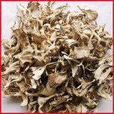 100% Natural Maitake P. E. Brown Polvo amarillo