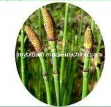 Extractos naturais de Equisetum Arvense para cuidados com a pele, 4: 1 ~ 20: 1