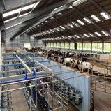 Revestimento de aço leve para vaca leiteira e vaca leiteira