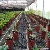 Flor de pingos de estufa poupança de água do sistema de irrigação