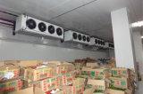 シーフードおよび野菜のためのフリーザー部屋または冷蔵室または低温貯蔵