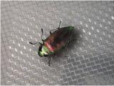 Сеть насекомого HDPE анти-, анти- сеть тля для парника