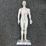 Prix usine avec le modèle de mâle d'acuponcture de qualité