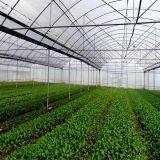 De industriële Serre van de Film van de Landbouw voor Verkoop