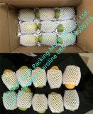 Les courgettes Making Machine net d'emballage en mousse