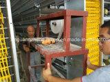 Estructura de acero de aves de corral pollo la construcción de casas prefabricadas
