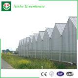 Policarbonato eficiente das emissões para o sistema de cultivo hidrop ico NFT para tomate e alface